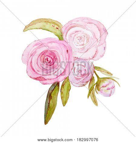 Watercolor Peony Flowers (hand drawn)