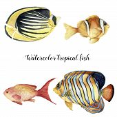 Watercolor tropical fish set. Hand painted Royal angelfish, Butterflyfish, Sea goldie and Clownfish isolated on white background. Underwater animal illustration for design, fabric or print poster