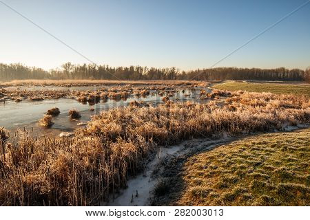 Winter Landscape With Dry And Frosted Reed Plants In The Dutch National Park Biesbosch, Werkendam, N