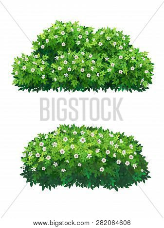 Green Bush With White Flowers Of Different Shapes. Ornamental Plant Shrub For Decorate Of A Park, A