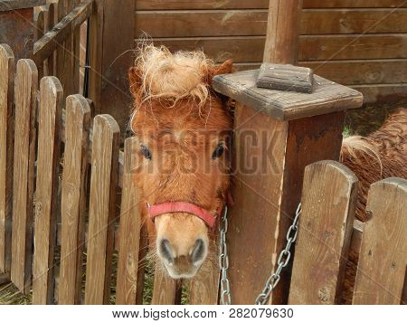 Horses in the aviary on the farm poster