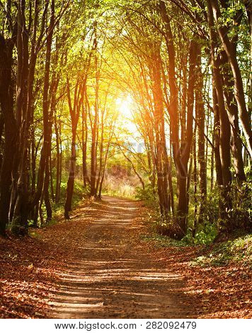 Colorful Trail Path In A Green Deciduous Forest In The Sunlight At Sunset, Woods Landscape