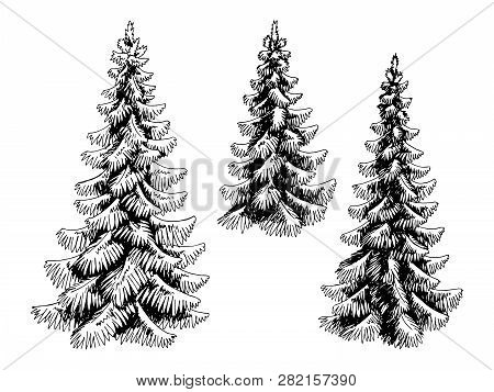 Fir Tree Set Spruce Graphic Black White Isolated Sketch Illustration Vector