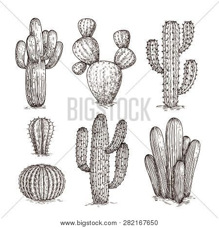 Hand Drawn Cactus. Western Desert Cacti Mexican Plants In Sketch Style. Cactuses Doodle Vector Set.