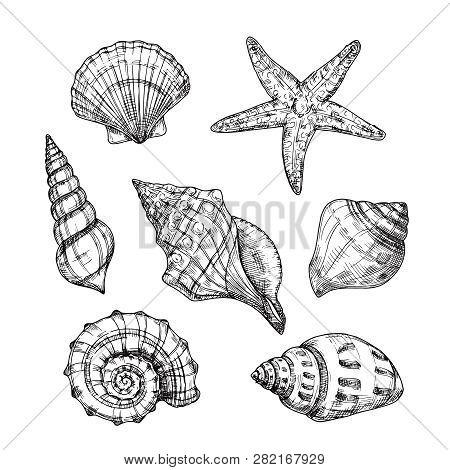Hand Drawn Sea Shells. Starfish Shellfish Tropical Mollusk In Vintage Engraving Style. Seashell Isol