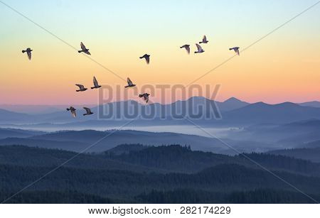 Foggy Morning In The Mountains With Flying Birds Over Silhouettes Of Hills. Serenity Sunrise With So