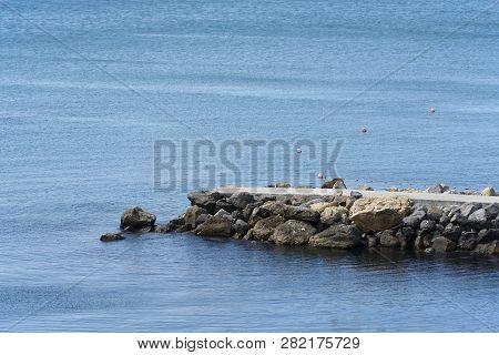 Stone Pier Or Concrete. Stone Pier In The Sea, Side View
