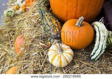 Autumn Harvest Background. Pumpkins And Squash On A Hay Bale With Chrysanthemum Plant