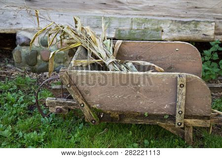 Antique Wheelbarrow. Cornstalks In A Weathered Wooden Wheelbarrow.