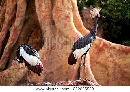 Grey Crowned Crane. Two Beautiful wild crane in a exclusive ambient. Two Bird of Paradise. poster