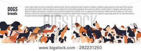 Background With Place For Text And Different Thoroughbred Dogs. Horizontal Orientation Banner, Flyer