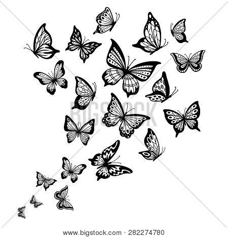 Butterflies Flow. Butterfly Wing, Spring Flying Insect And Flight Wave Vector Background Illustratio