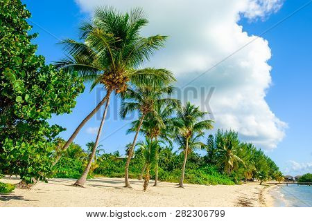 Beach In The Caribbean At South Hole Sound In Little Cayman, Cayman Islands