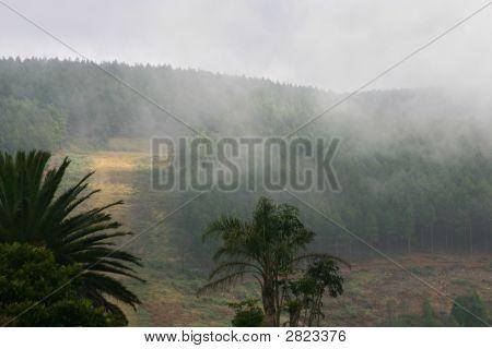 Rain Forrest