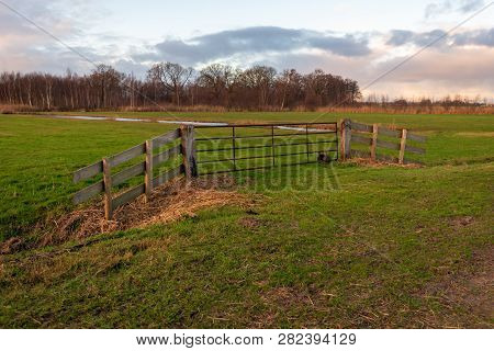 Pasture In A Dutch Polder Closed With A Rusty Iron Gate. It Is Autumn, The Reeds Are Yellowed And Th