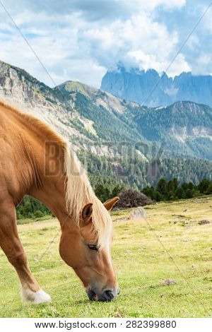 Horse Over Dolomite Landscape Geisler Or Odle Mountain Dolomites Group, Val Di Funes, Tourist Region