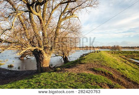 Bare Tree In The Foreground Of A Flooded Landscape In The Dutch National Park Beisbosch. On The Rop