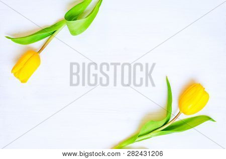 Spring flower background - composition made of yellow spring tulip flowers on the white background. Flat lay, top view, space for text. Spring flower composition