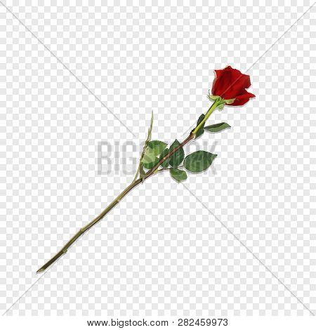 Vector Illustration Of Photo-realistic, Highly Detailed Flower Of Red Rose Isolated On Transparent B