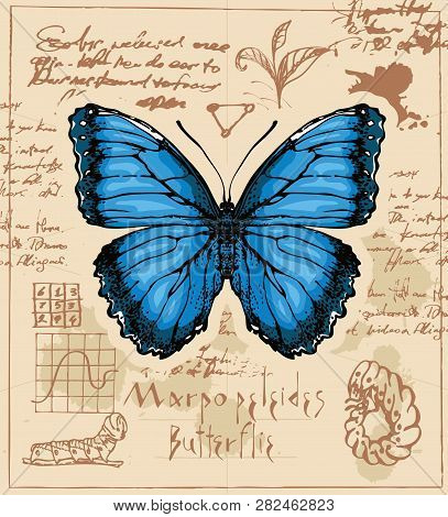 Vector Banner With Drawing Of A Morpho Peleides Butterfly And It Larva On The Background Of Old Manu