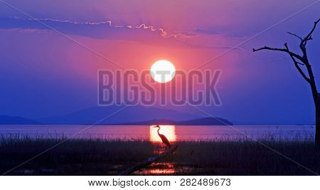 Landscape view of a scenic vista over Lake Kariba with a vibrant sunset and a grey heron directly in line with the setting sun rays.  Matusadona National Park, Zimbabwe poster