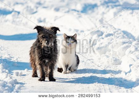 A Black Dog And A White Cat Are Sitting Together On A Snowy Street. The Concept Of Friendship, Love