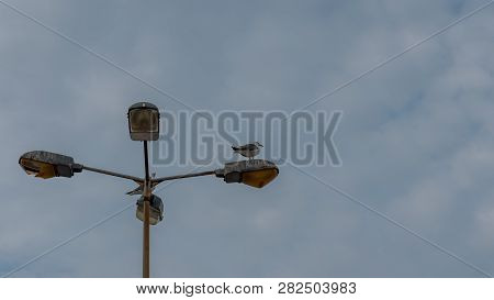 Two Seagulls Standing On Top Of Light Post In Greece