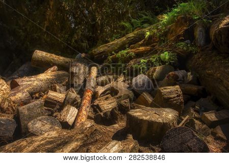 Moss On Stump In The Forest. Old Timber With Moss In The Forest. Stump Green Moss Spruce Pine Conife