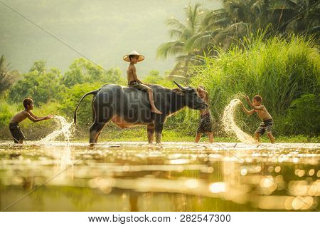 Asia Children On River Buffalo / The Boys Friend Happy Funny Playing Water And Animal Buffalo Water