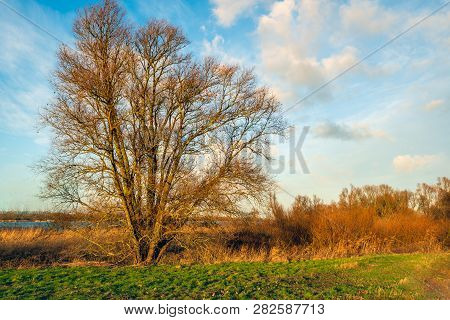 Tree With Bare Branches In The Light Of The Setting Sun In The Winter Season. The Photo Was Taken On
