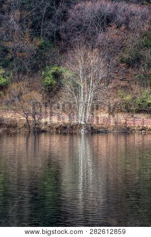Geumpyeong Reservoir Trees  And Surrounding Nature Reflecting On The Water. Geumpyeong Reservoir Is
