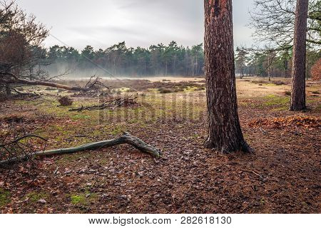 Evening Mist In The Background A Wet Dutch Forest. The Photo Was Taken In Boswachterij Dorst, North
