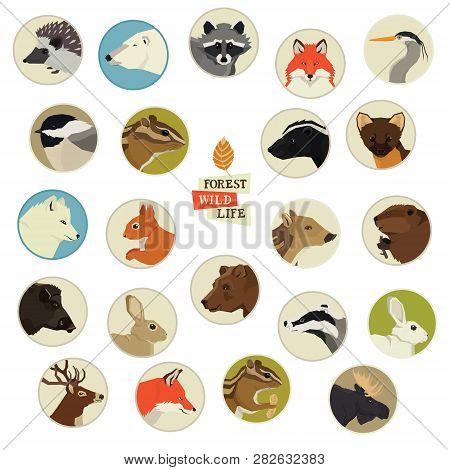 Forest Wild Life Animals Round Frames Set