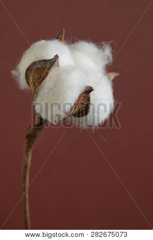 Cotton Branches In Vase, Close Up On Background