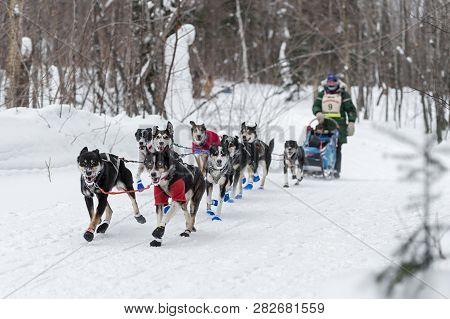Grand Portage, Mn - January 29, 2019: Colleen Wallin Comes In To Mineral Center Checkpoint During Th