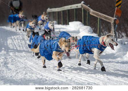 Sled Dog Team Crosses Bridge During Race - Motion Blur