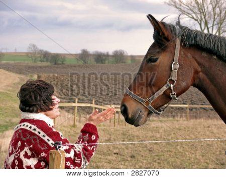 Talking To Horses