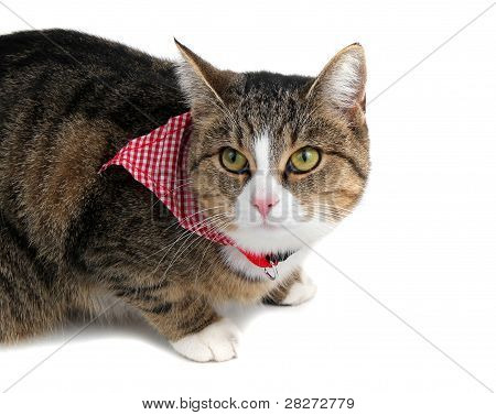 sweet little cat with bandana on white poster