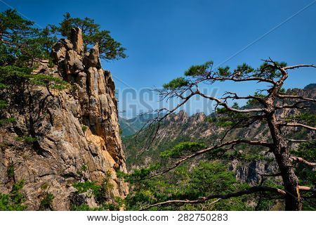 Pine tree and rock cliff at Towangpok Observatory viewpoint, Seoraksan National Park, South Korea poster