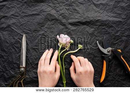 Girl Florist Lays Out A Flower Tulip. Scissors And A Knife.