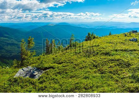 Beautiful Landscape In Mountains. Grassy Meadow With Small Pine Trees And Stones On The Top Of A Hil