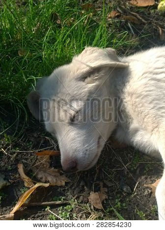 Outbred Homeless Puppy Sleeping Carelessly On The Grass In The Afternoon