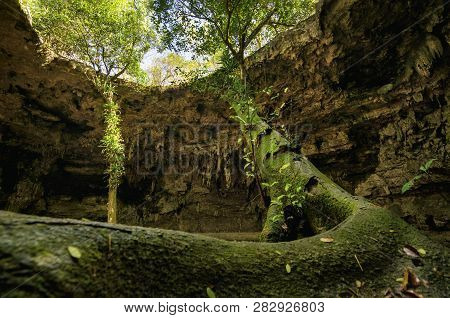 Bottom Up View: Big Tree Growing From Cave To Blue Sky. Tree Start To Grow In A Cenote Cave And Reac