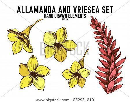 Vector Collection Of Hand Drawn Colored  Allamanda, Vriesea