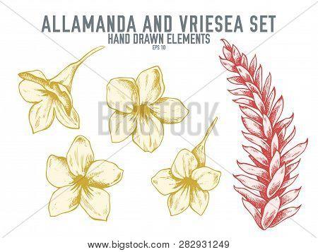 Vector Collection Of Hand Drawn Pastel Allamanda, Vriesea