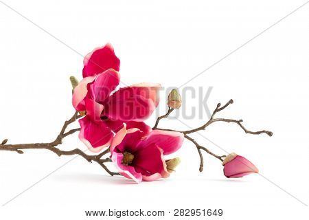 An image of some red magnolia flowers