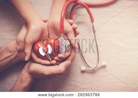 Hands Holding Red Heart And Kidney With Stethoscope, World Kidney Day