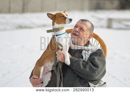 Outdoor Portrait Of Caucasian Senior Man Taking His Majestic Basenji Dog On The Hands. The Dog Is Pr