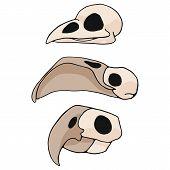 Bird skull cartoon vector illustration motif set. Hand drawn isolated flamingo, parrot and avian bone elements clipart for nature blog, natural history bone skeleton graphic poster