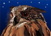 owl in the night. a vector illustration. poster
